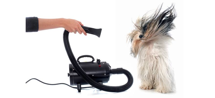 blow dryer for dog hair