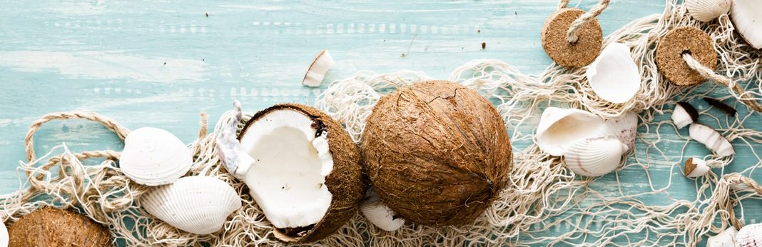 can dogs eat coconuts
