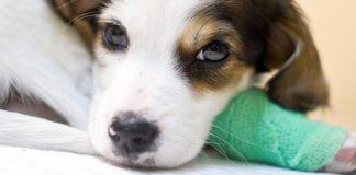 can i use Neosporin on my dog