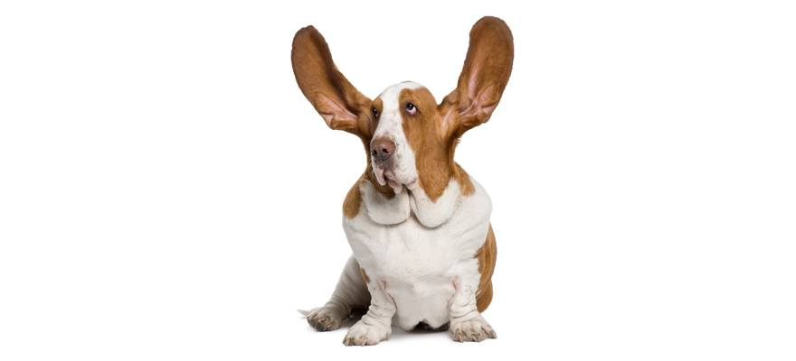 The Essential Guide To Cleaning Your Dogs Ears