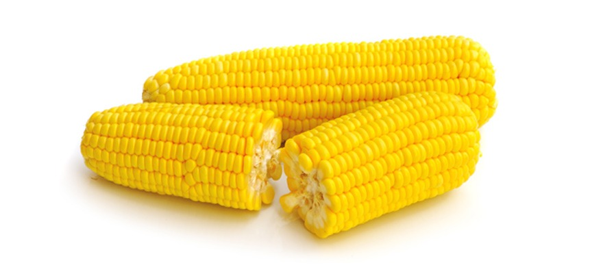Can I Give My Dog Corn On The Cob