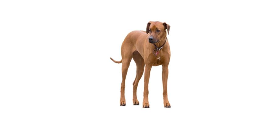 dog wearing collar