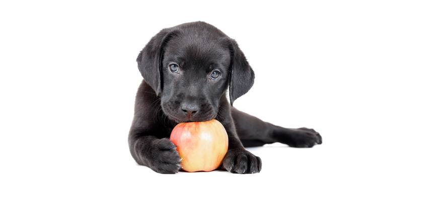 Can Dogs Have Apples Everyday