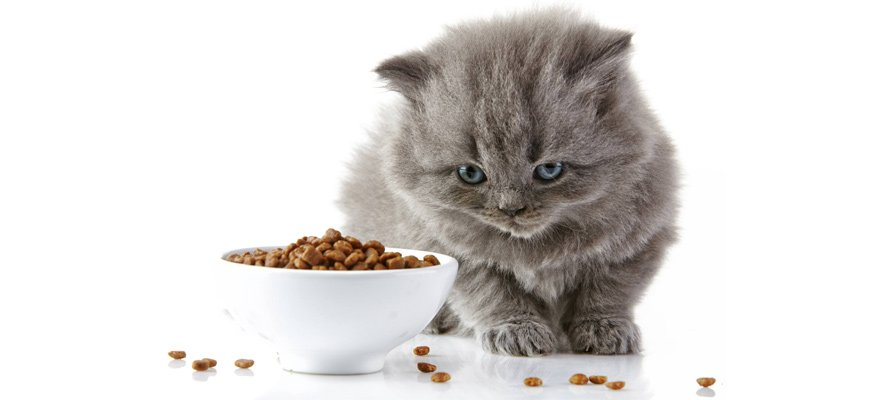 10 Best Dry Cat Foods Review Guide 2019