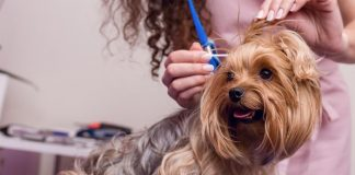 essential guide to cleaning your dogs' ears