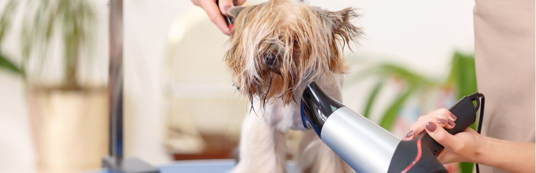 how to correctly blow dry your dog's hair