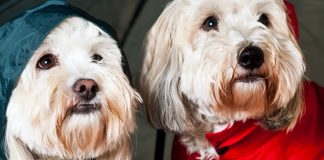best raincoats for dogs