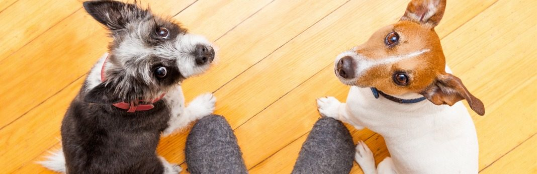 tips to make my dog more obedient