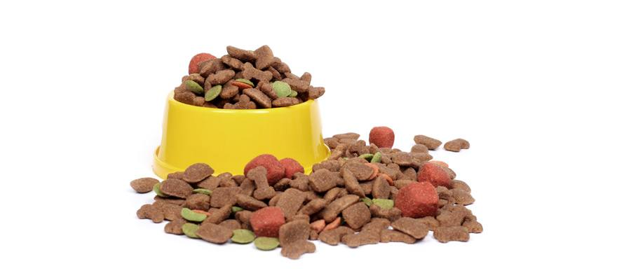 what makes a good grain free dog food