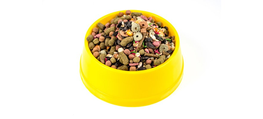 what should i look for in the best dry food for my cat