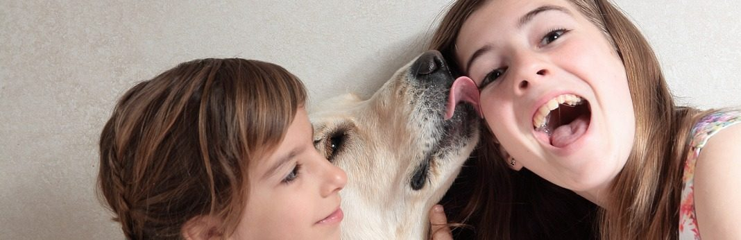 why does my dog lick me