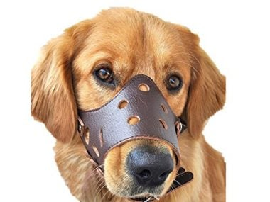 Dog Muzzle Leather by photoiscool