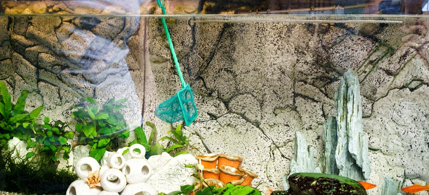 advantages of cleaning your fish tank