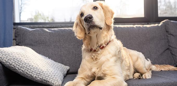 baytril for your dog