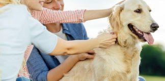 benadryl dosage for dogs