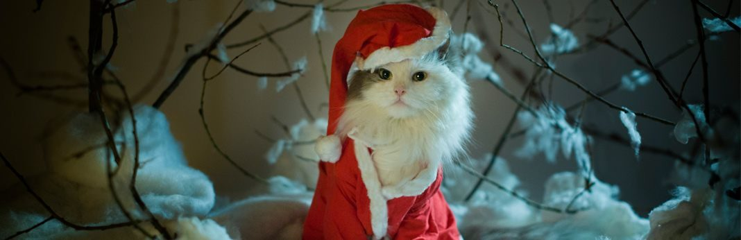 best cat christmas costumes