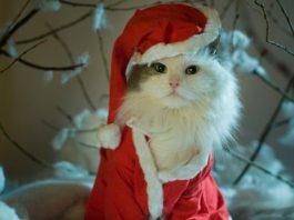 best cat christmas costumes