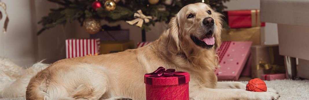 best christmas presents for dogs in 2018 - Christmas Presents For Dogs