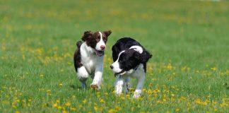 best dog playpens