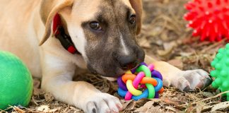 best puzzle toys for dogs