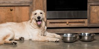 best wet dog foods
