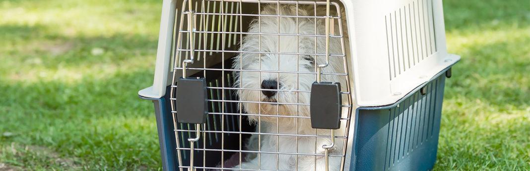 crate training dog