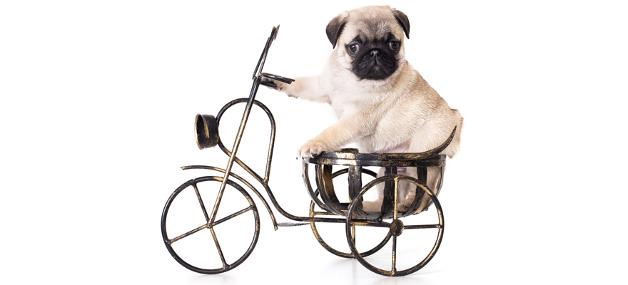 The Best Dog Bike Trailer Reviewed In 2019 My Pet Needs That