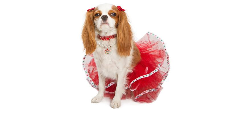 dog christmas outfits buying guide