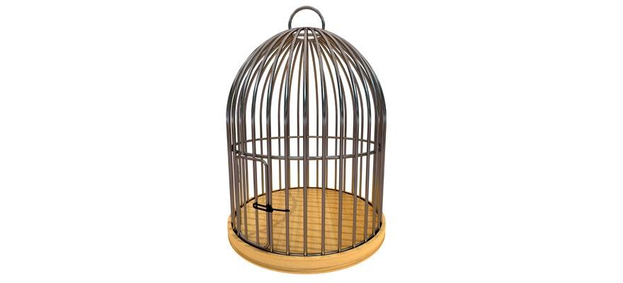 empty-birdcage