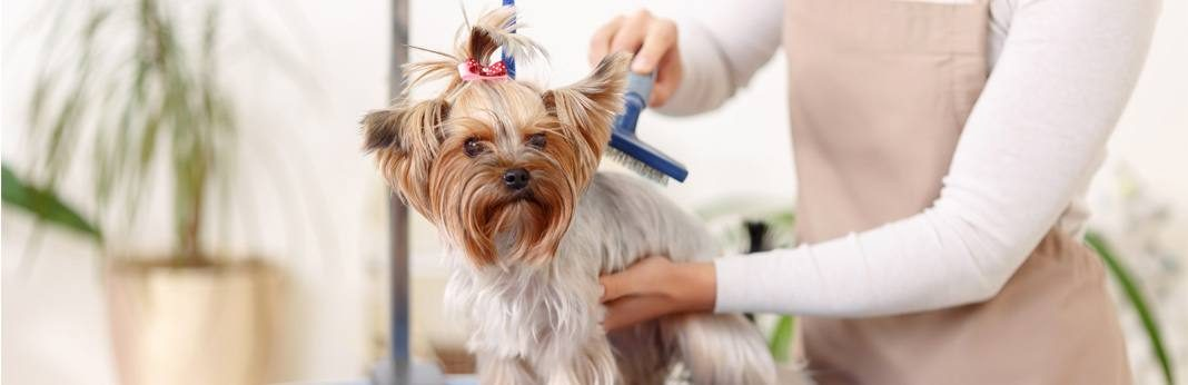 How Much To Tip Dog Groomer