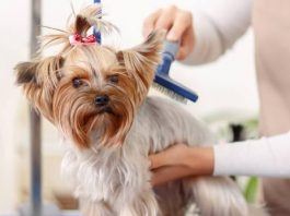 how much to tip a dog groomer