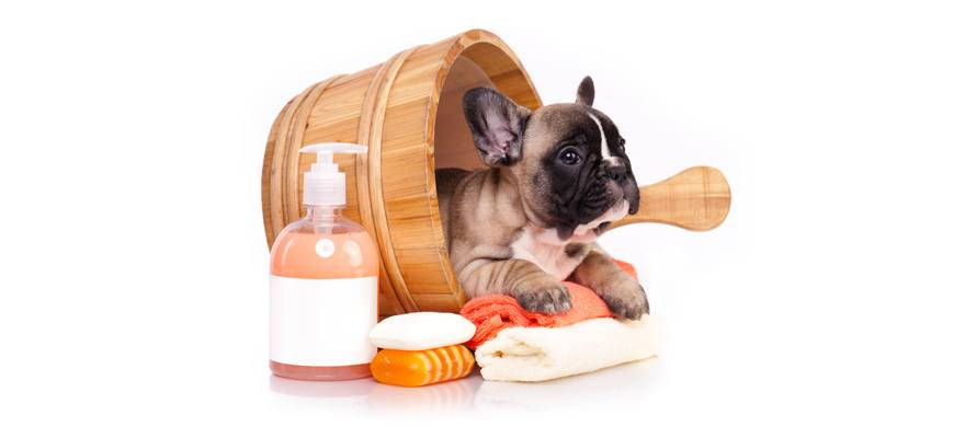 how to choose the right puppy shampoo