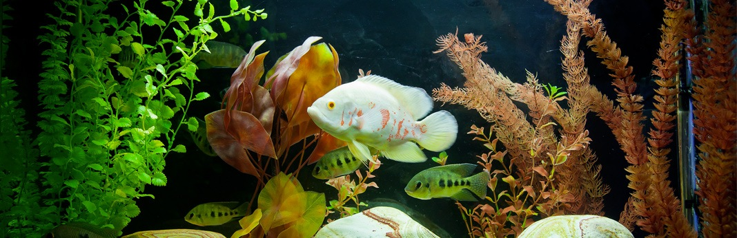How to properly clean a fish tank for How to properly clean a fish tank