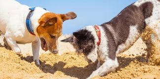 how to stop a dog from digging