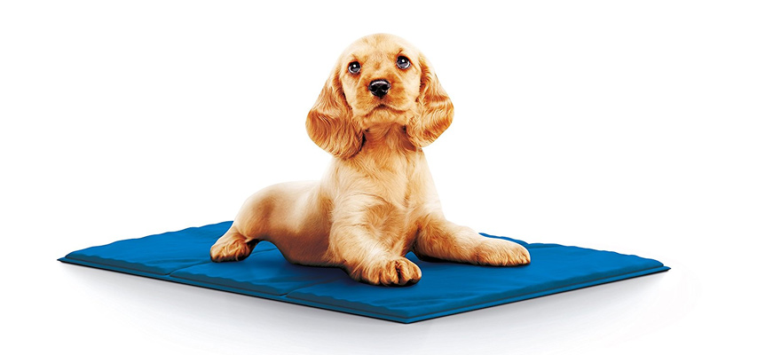 puppy on cooling mat