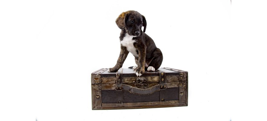 puppy on suitcase