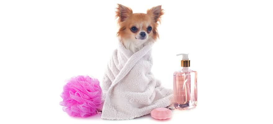 puppy shampoo
