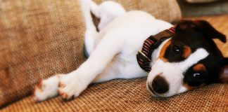 simplicef for dogs uses and benefits