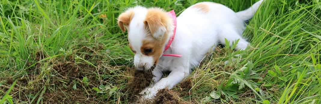 stop dog from digging