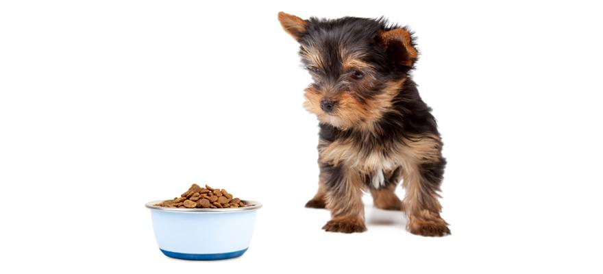5 Best Dog Food For Yorkies Review Guide 2019