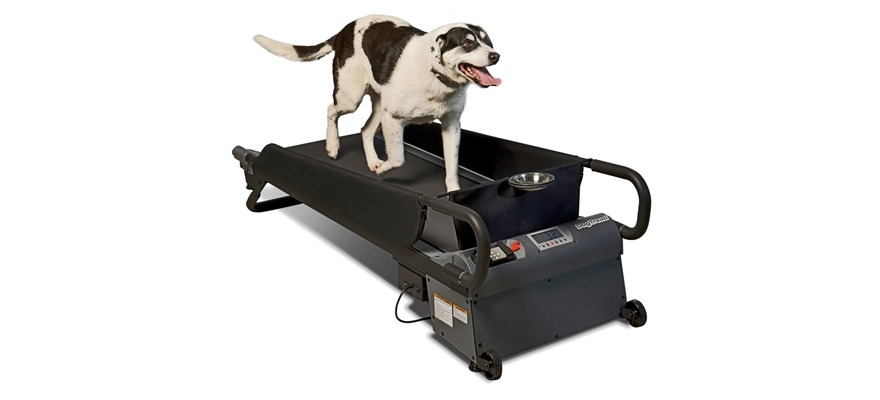 why does your dog need a treadmill
