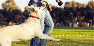 are nylabones safe for dogs