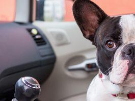 best dog seat belt