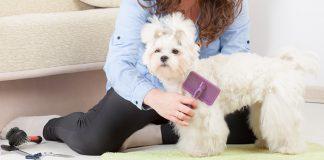best-dog-shedding-brush
