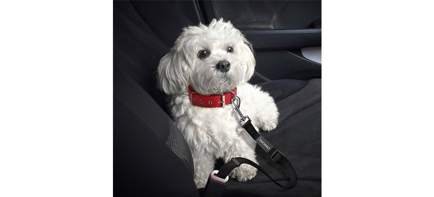 best seat belts for dogs