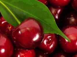 can dogs eat cherries