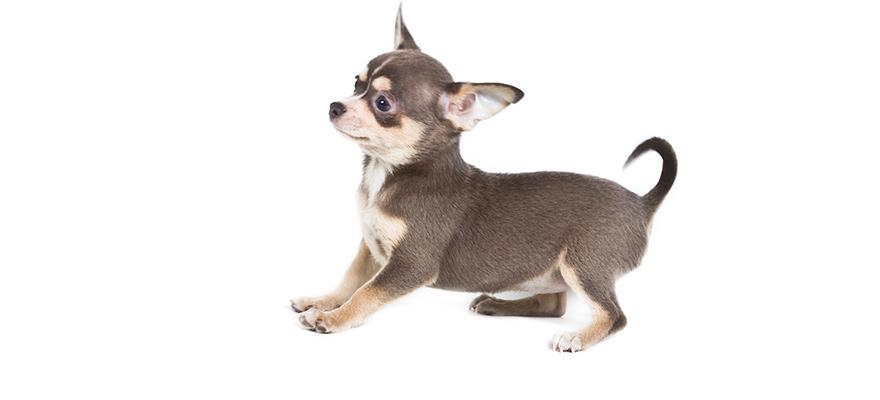 dog body posture