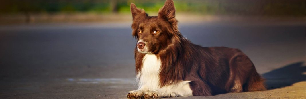 how-to-stop-dog-whining