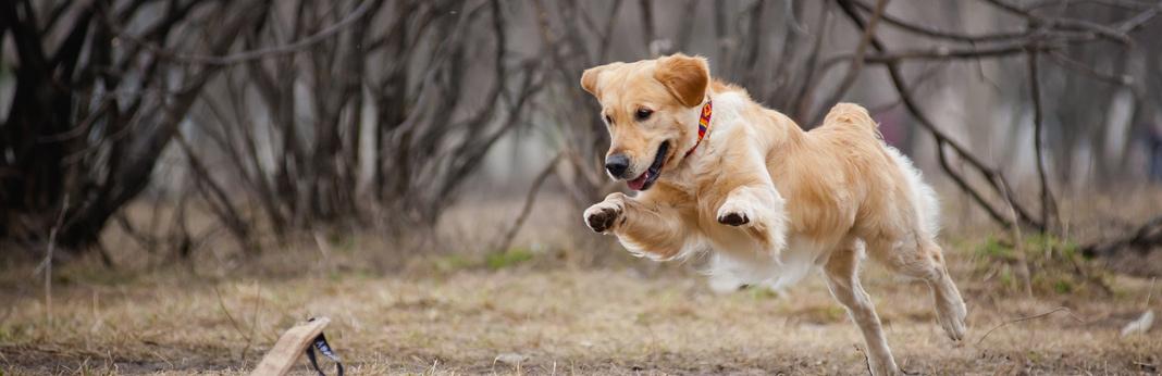Fetch Dog Food My Account