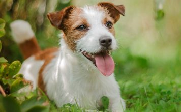 methocarbamol for dogs
